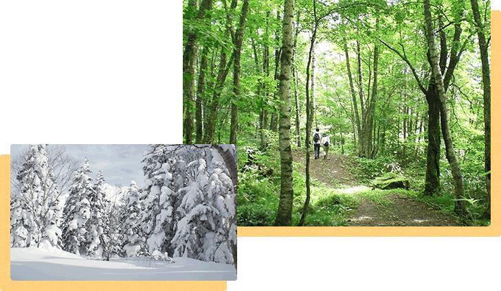 自然散策路