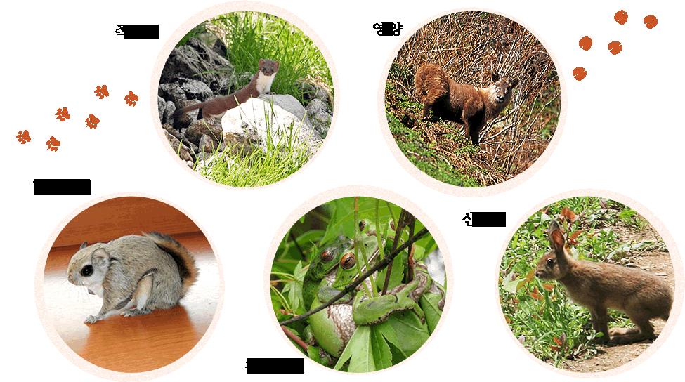 신호타카 로프웨이 주변에 살고 있는 야생 동물