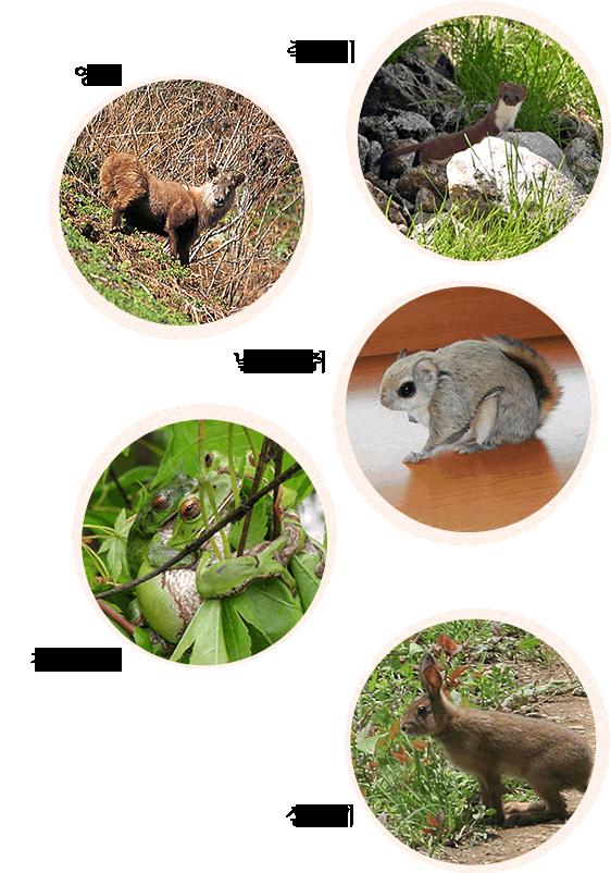 신호타카 로프웨이 주변에 살고 있는 야생 동물_sp