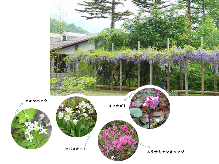山野草ガーデン