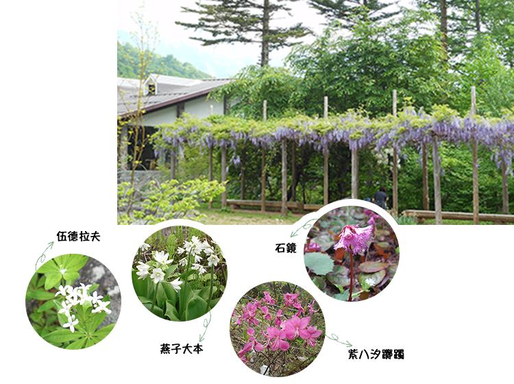 山野草花園